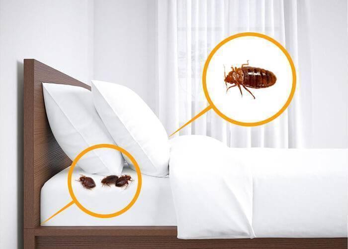 Как избавиться от постельных клопов: способы и их эффективность