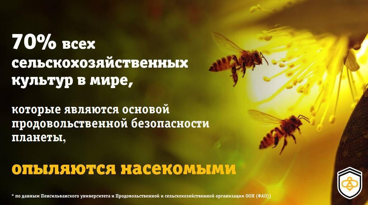 Комары — интересные факты