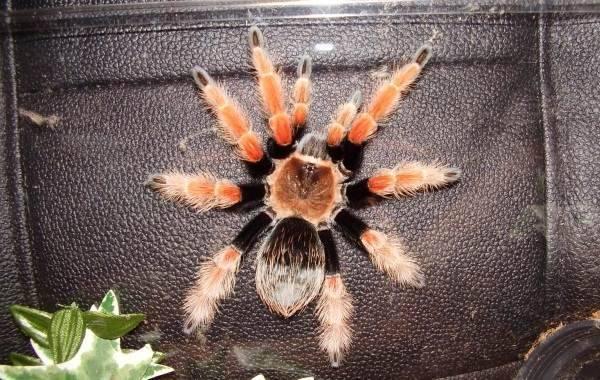 15 интересных фактов о пауках