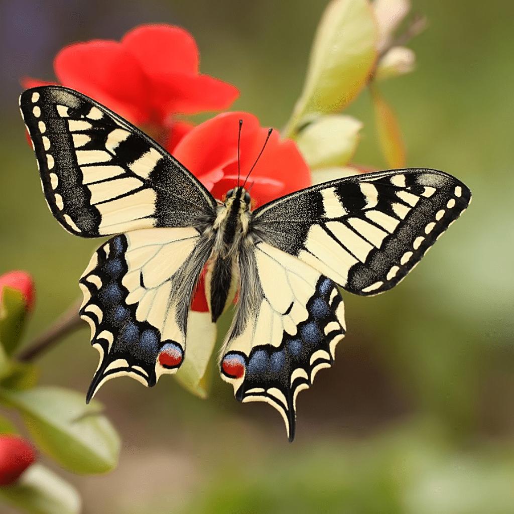 Мухи с длинными задними лапами. муха – описание, виды, где обитает, чем питается, фото