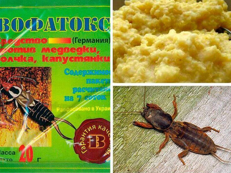 Препарат вофатокс — отличное средство от тараканов и медведки