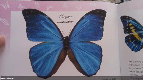 Морфо дидиус – голубое чудо тропиков