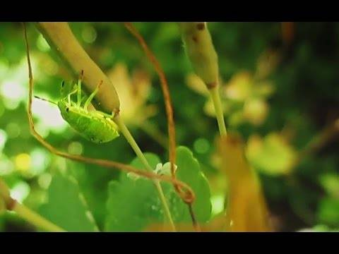 Лесной клоп: внешний вид, чем опасен в квартире и как с ним бороться