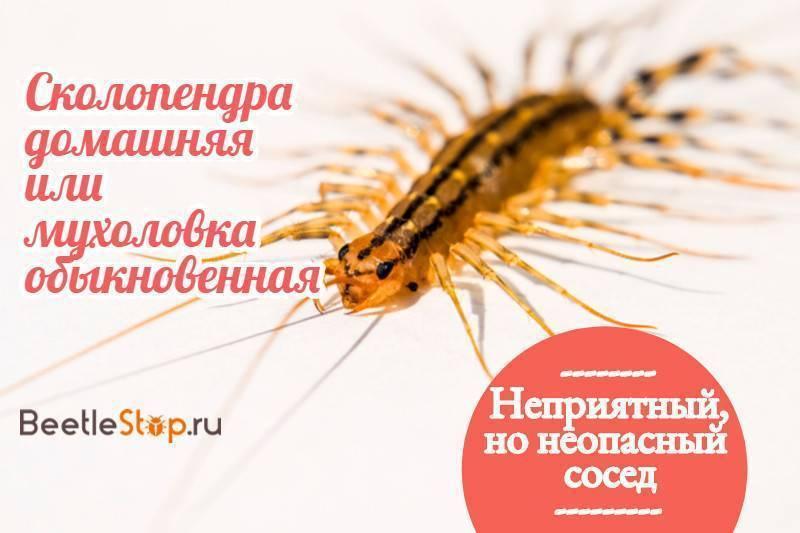 Опасны ли сколопендры (многоножки) в крыму? ядовиты ли они? как избавиться от непрошеных гостей?
