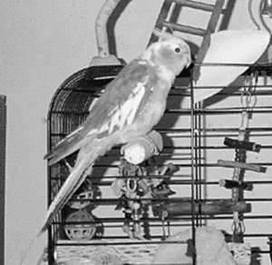 Куриный клещ (Dermanyssus gallinae) - как избавиться раз и навсегда
