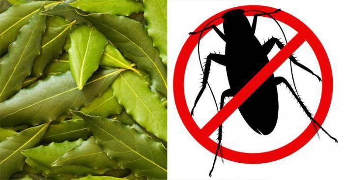 Применение лаврового листа против тараканов