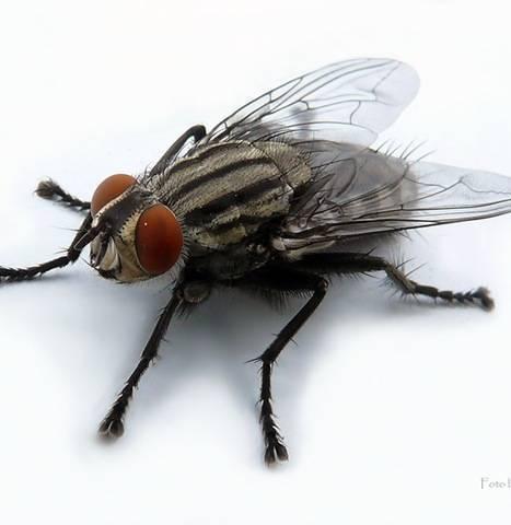 Как прогнать насекомых натуральными средствами