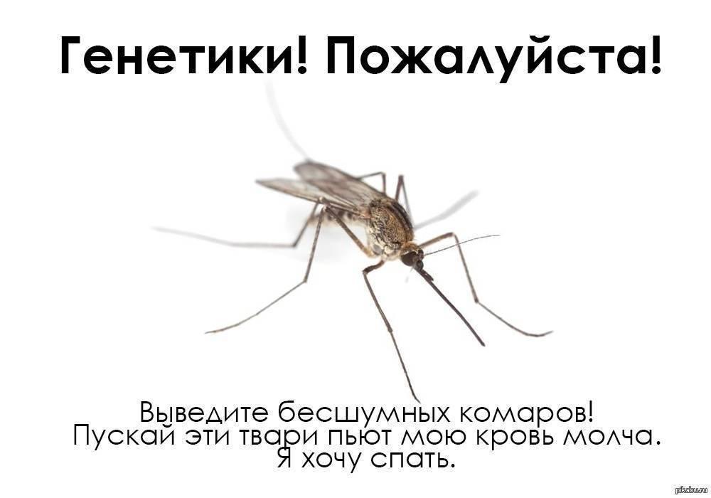 Причины самостоятельной гибели мух в квартире