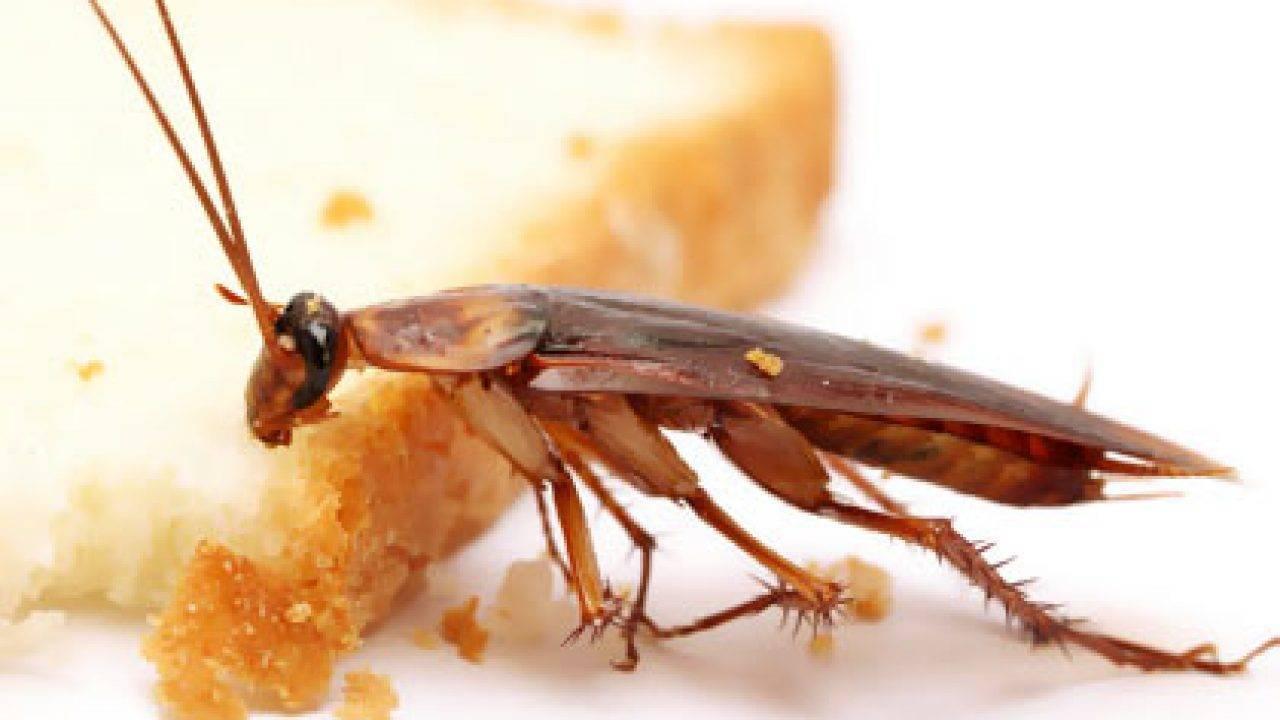 Банка и двухсторонний скотч в борьбе с тараканами