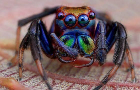 Редкие пауки: 10 самых необычных видов