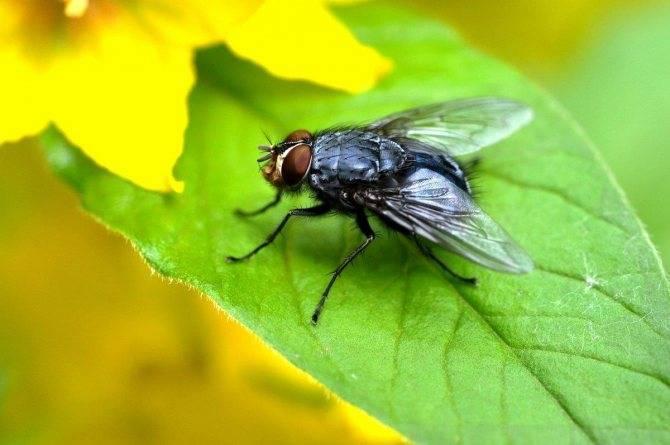 Почему мухи кусаются, особенно, в конце лета?