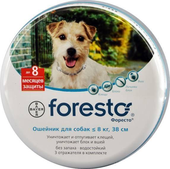 Эффективен ли ошейник от блох для собак и котов?
