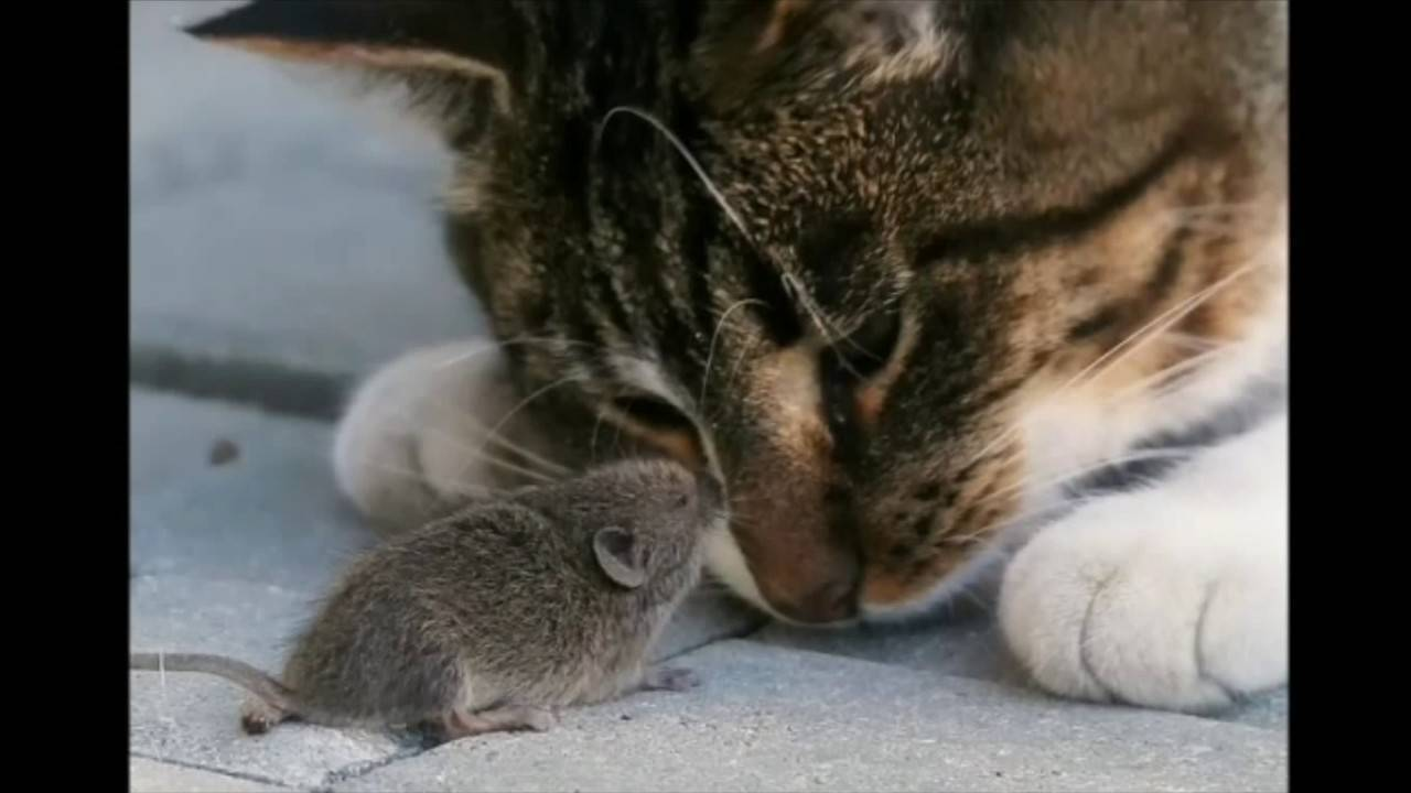 Самостоятельное избавление от мышей в домашних условиях
