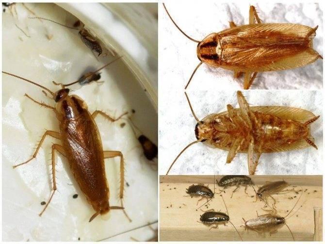 Как бороться с тараканами в общаге?