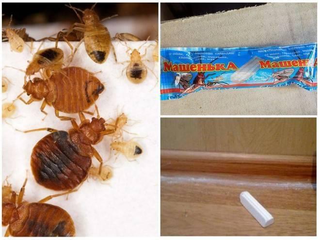 Как пользоваться мелком машенька от тараканов и клопов