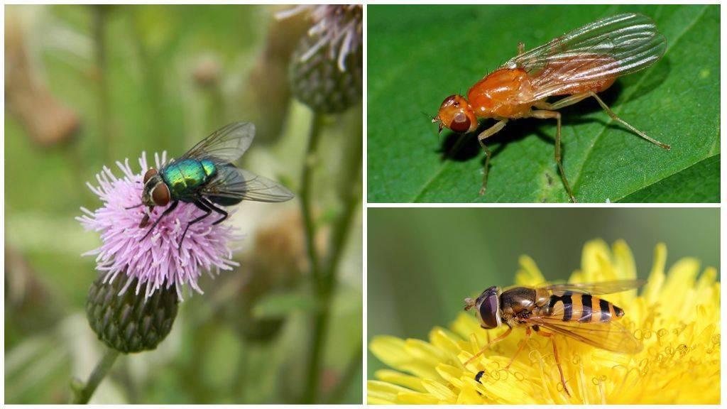 Почему кусаются мухи и можно ли защитить от них своего питомца! почему мухи кусаются в августе? почему мухи кусаются летом