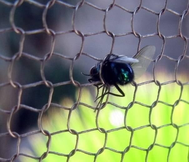 Почему насекомые не падают с потолка.  ученые разобрались, почему муха не падает с потолка