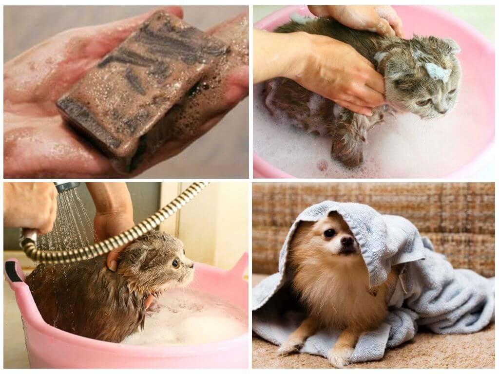 Народные способы избавления от блох у кошек и собак