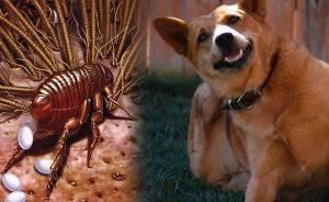 Как избавиться от блох у домашних животных?
