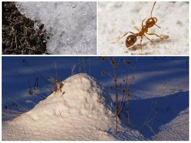 Добро пожаловать в муравьиный город! или как устроен муравейник?