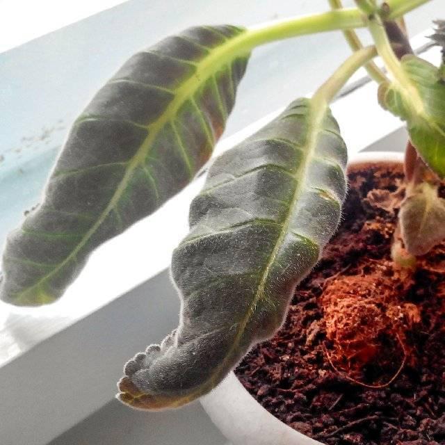 Как бороться с паутинным клещом на комнатных растениях в домашних условиях?