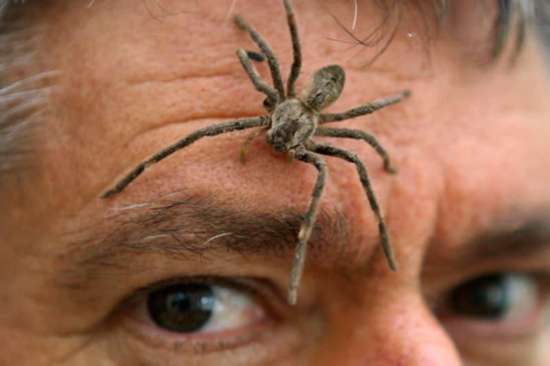 7 самых больших пауков мира