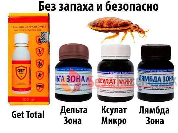 Эффективные препараты от клопов без запаха