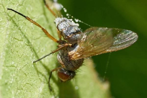 Почему в доме зимой летают мухи. зимние приметы, связанные с различными природными явлениями. избавляемся от комнатных мух