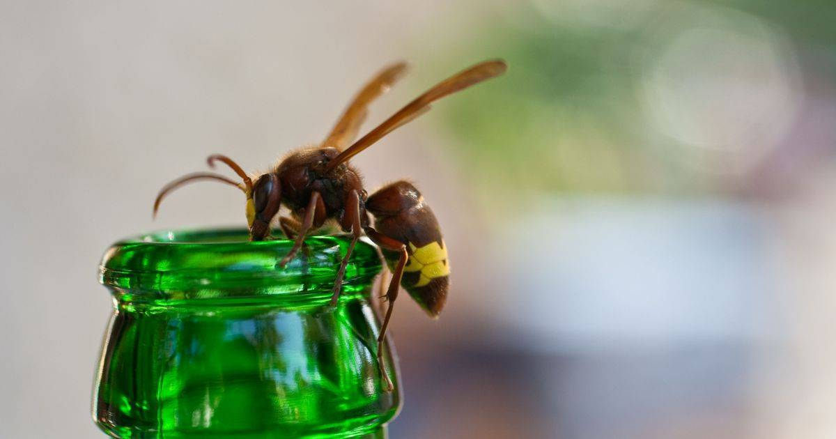 Куда пропали пчелы, и как это отразится на наших участках