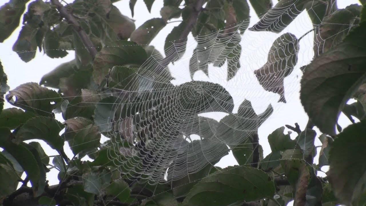 Виды клещей, паразитирующих на яблонях – как бороться с паутинным клещом на яблоне – меры борьбы и профилактика заражения