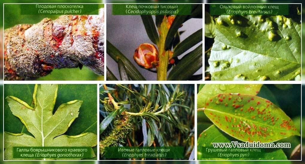 Клещевит — контактный акарицид для защиты растений от клещей