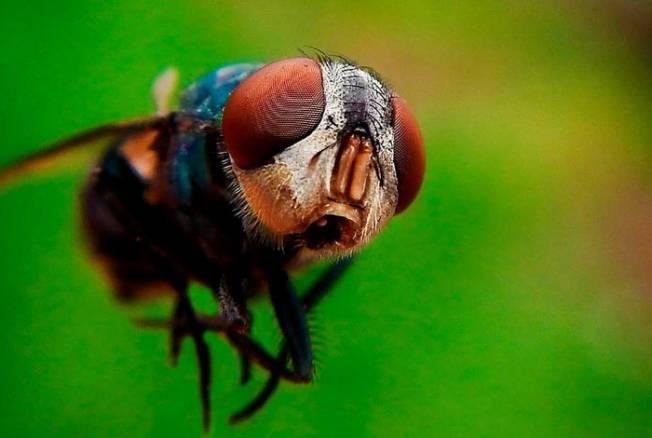 Обзор средств от укусов комаров и мошек