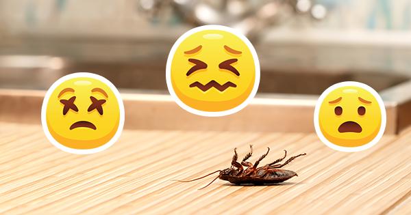 Чем опасны тараканы? усиками проверяем, а лапками заражаем