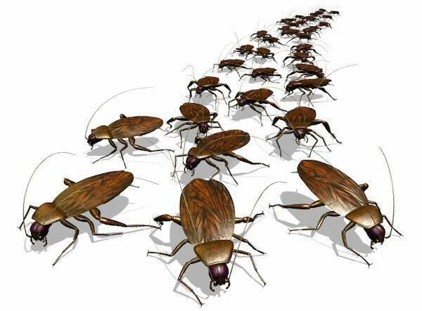 Приметы и суеверия про тараканов в доме