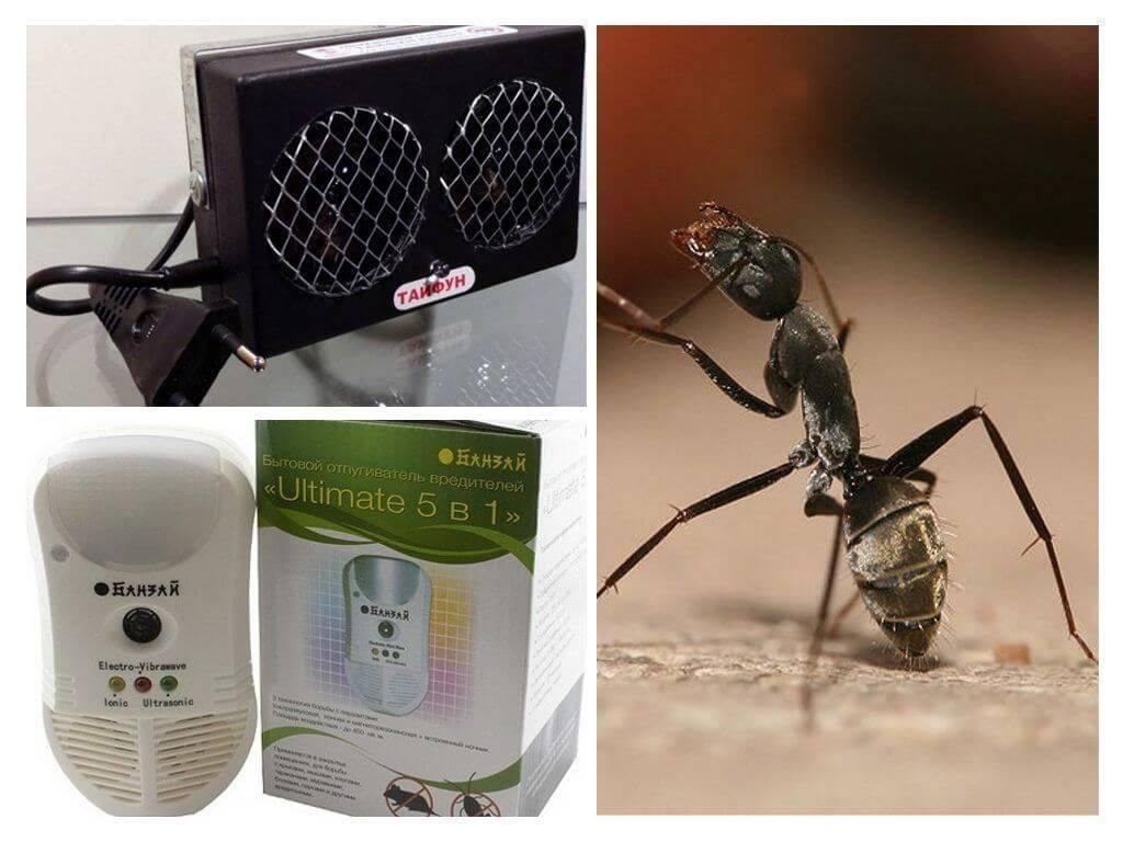 Как избавиться от муравьёв