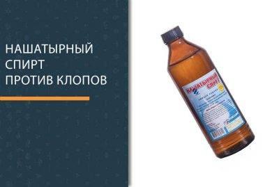 Эффективные средства борьбы от медведки: химия и нашатырный спирт