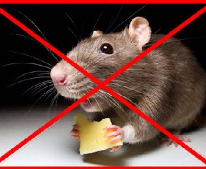 Признаки отравления крысиным ядом и правила оказания первой помощи