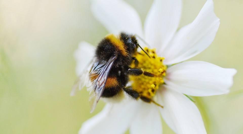Лечим пчелиный укус у ребёнка