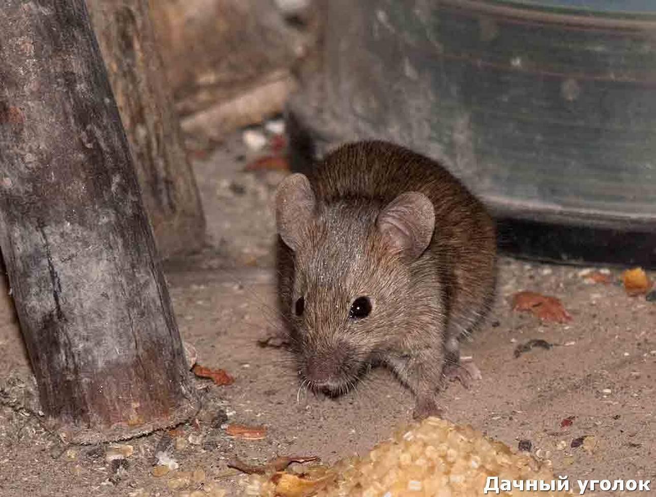 Мышам на дачу вход воспрещён