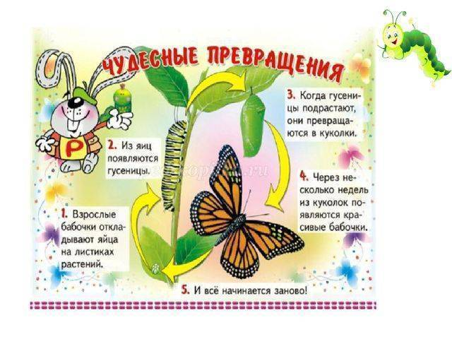 Метаморфозы в природе. превращение гусеницы в бабочку..