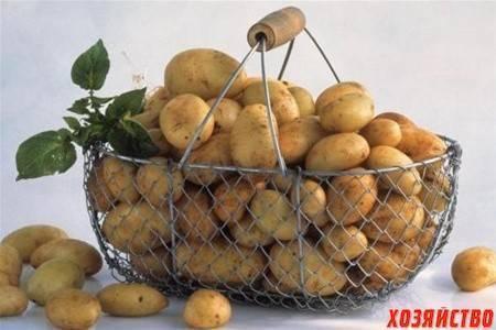 Картофельная моль и методы борьбы с ней
