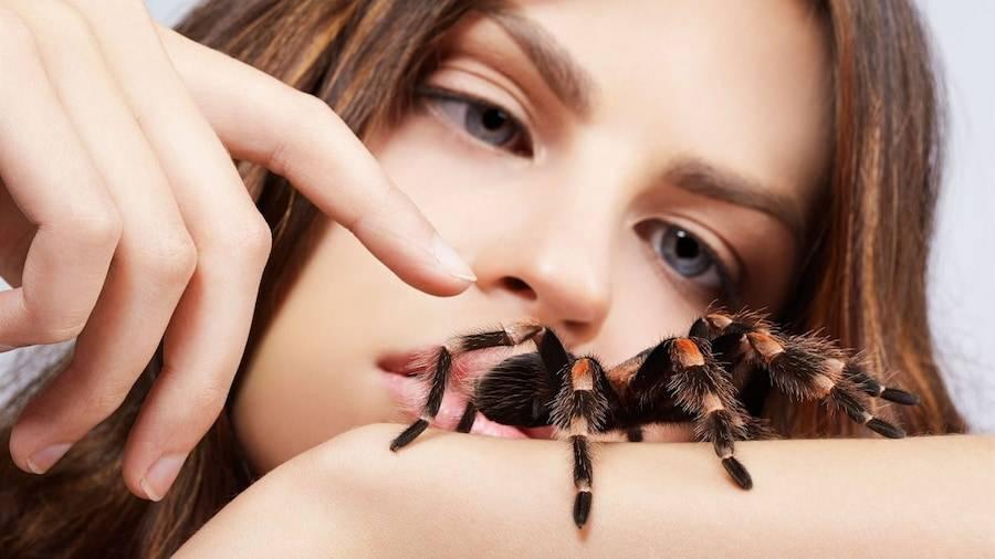 Черные и белые пауки