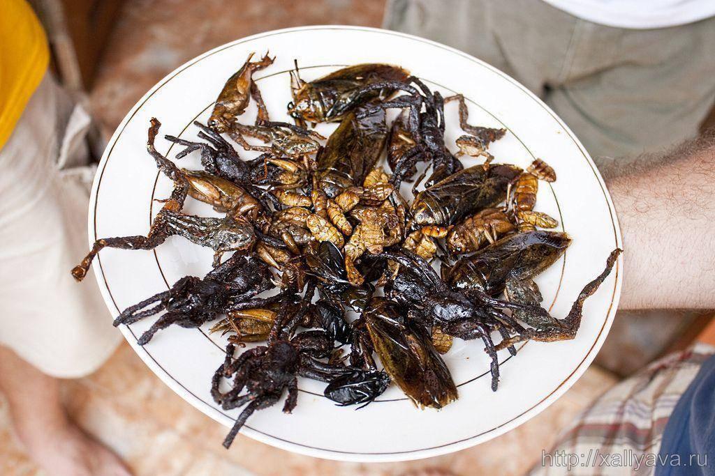 Большие чёрные тараканы