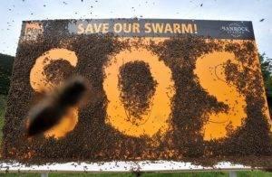 Почему пчелы оказались в опасности и чем это грозит человечеству