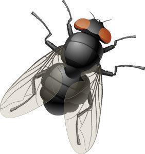 Какие заболевания могут переносить комары и где они больше всего распространены