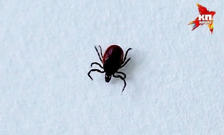 Где зимуют осы, спят ли зимой или умирают?