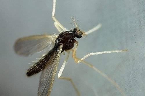 14 средств после укусов комаров для детей