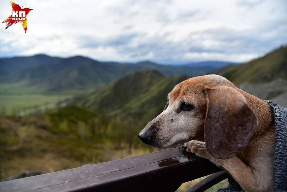 Что делать, если нашли клеща на собаке и как он выглядит