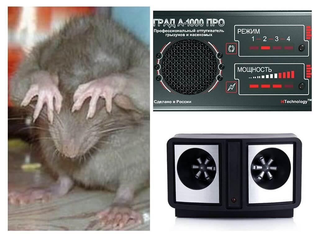 6 эффективных средств от мышей