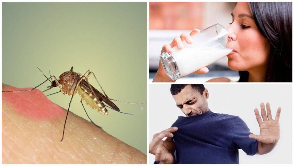 ЗдоровьеКомары: Почему они нас кусают, и как от них спастись
